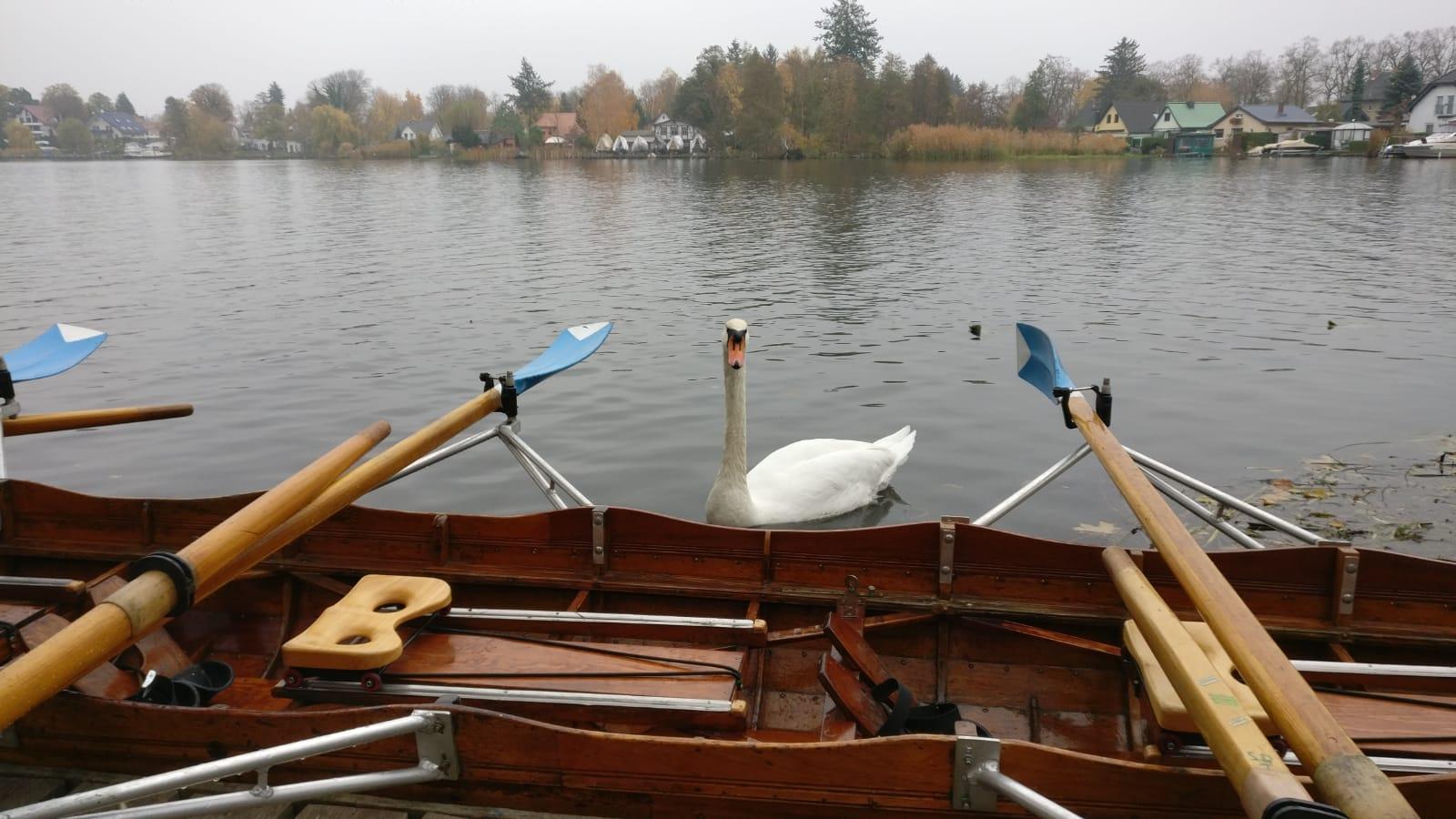 Herbst auf dem Dämmeritzsee